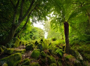 The Fernery at Fota House