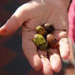 """""""The creation of a thousand forests is in one acorn."""""""