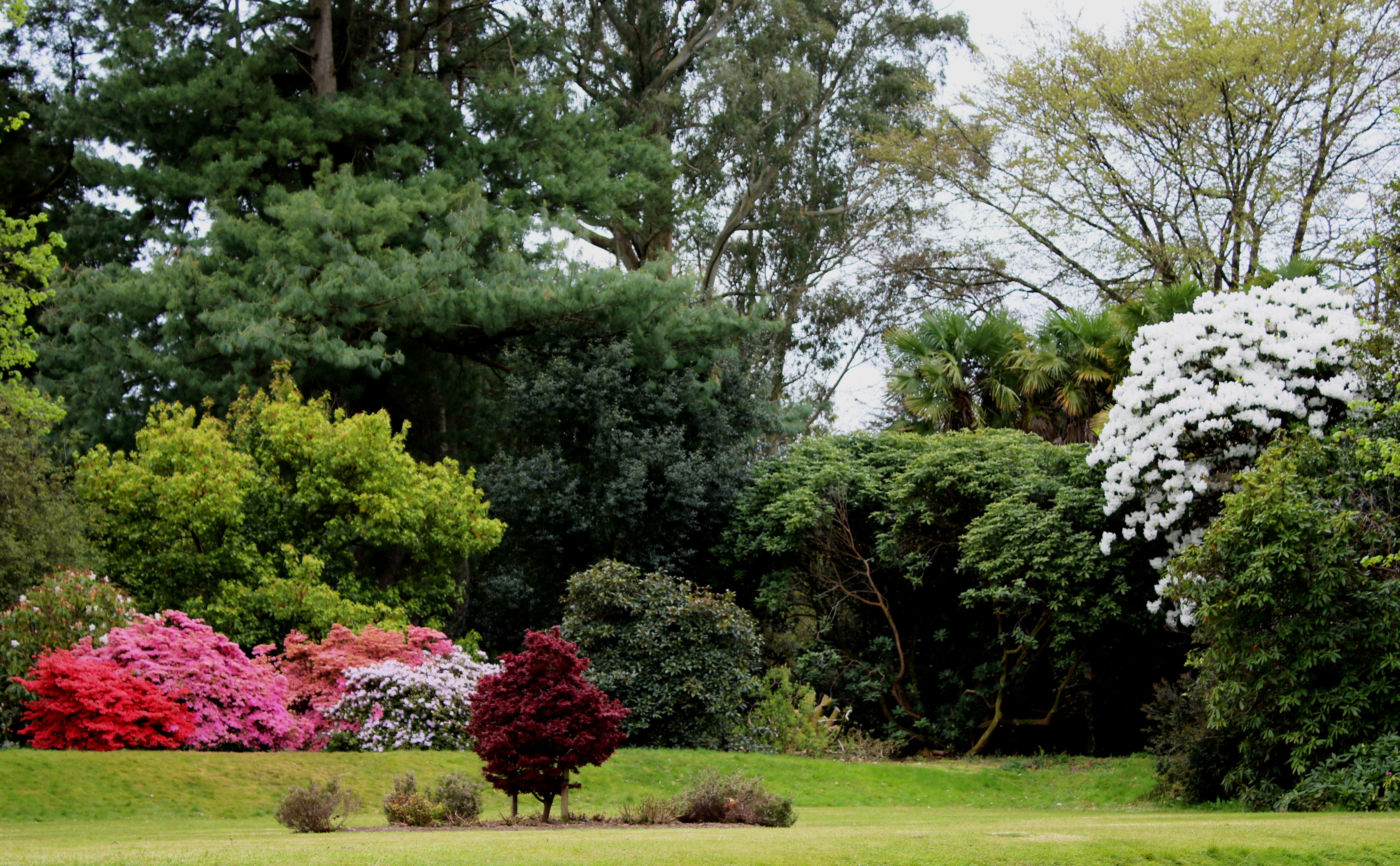 Plant Fair and Rhodedendron 002