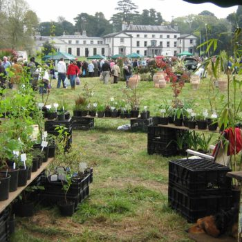 ANNUAL PLANT FAIR ON 22nd APRIL