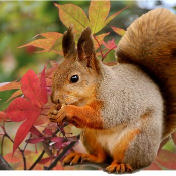 Scurry along to our Autumn Squirrel Trail!
