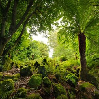 The Fernery at Fota