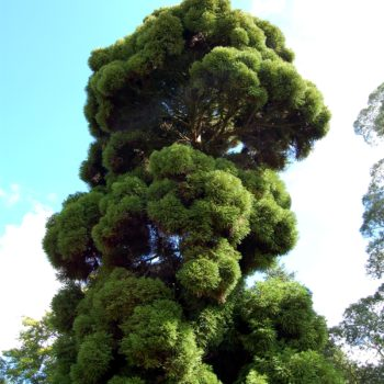 And if there's ONE tree you must see at Fota…