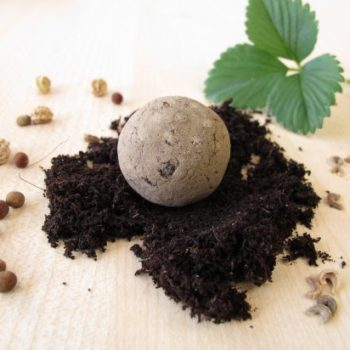 How to make wildflower seed bombs.